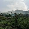 150222-1550-52R - unterwegs nach Deniyaya (Sinharaja Urwald)