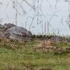 150226-0950-59R - Bundala Nationalpark bei Tissamaharama