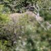 150226-1304-12R - Bundala Nationalpark bei Tissamaharama