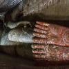 150303-1044-03R - Höhlentempel in Dambulla