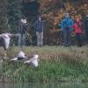FOK-Team und Graugänse - 161029-0947 - Flachsee - Okt. 16