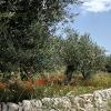 Sizilien - 040523-1323-73_k2R