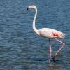 Flamingo-150723-1134-18
