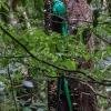 Resplendent Quetzal M - 160221-1035 - Monteverde NP - Februar 2016