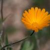 Blumen-170107-1341R