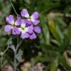Blumen-170115-1306R
